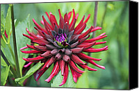 Chat Canvas Prints - Dahlia chat Noir Canvas Print by Dr Keith Wheeler