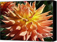Rain Drops On Flower Digital Art Canvas Prints - Dahlia Closeup...A Little Sun After the Rain Canvas Print by Terri Thompson