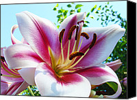 Framed Pink Lily Canvas Prints - Dahlia Flower art print Summer Dahlieas Floral Canvas Print by Baslee Troutman Fine Art Photography prints