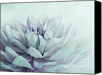 Ups Canvas Prints - Dahlia Canvas Print by Priska Wettstein