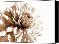 Umber Canvas Prints - Dahlia Sepial Flower Canvas Print by Jennie Marie Schell