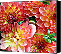 Garden Flowers Canvas Prints - Dahlias Canvas Print by Cathie Tyler