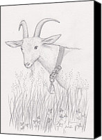Goat Drawings Canvas Prints - Dairy Goat Canvas Print by Amy Peare