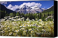 British Columbia Canvas Prints - Daisies at Mount Robson Canvas Print by Elena Elisseeva