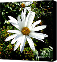 Daisies Pyrography Canvas Prints - Daisies Canvas Print by Eva Ason