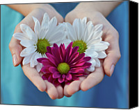 Atlanta Canvas Prints - Daisies In Child Hands Canvas Print by Natalia Ganelin