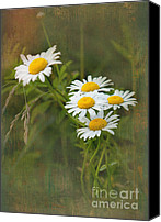 Daisies Flowers Canvas Prints - Daisies Canvas Print by Lena Auxier