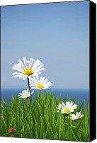 Copy Space Canvas Prints - Daisies On A Cliff Edge Canvas Print by Andrew Dernie
