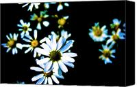 Blue Flowers Canvas Prints - Daisies Canvas Print by Grebo Gray
