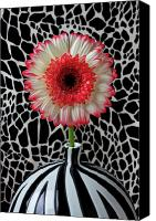 Chrysanthemums  Canvas Prints - Daisy and graphic vase Canvas Print by Garry Gay