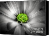 Selective Color Mixed Media Canvas Prints - Daisy Black and White Canvas Print by Ms Judi