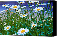 Daisies Pyrography Canvas Prints - Daisy Blue Canvas Print by Paul Barkevich