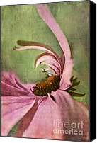 Textured Floral Canvas Prints - Daisy Fun - a01v04b2t05 Canvas Print by Variance Collections