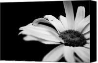 White Daisy Canvas Prints - Daisy in Black and White Canvas Print by Melissa  Riggs