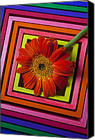 Flower Design Canvas Prints - Daisy In Box Canvas Print by Garry Gay
