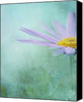 Melbourne Canvas Prints - Daisy In Mist Canvas Print by Sharon Lapkin