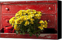 Flower Flowers Canvas Prints - Daisy Plant In Drawers Canvas Print by Garry Gay
