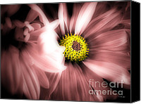 Wild-flower Mixed Media Canvas Prints - Daisy Shyness Canvas Print by Ms Judi