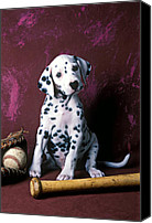 Mitt Canvas Prints - Dalmatian puppy with baseball Canvas Print by Garry Gay
