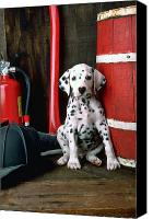 Dogs Canvas Prints - Dalmatian puppy with firemans helmet  Canvas Print by Garry Gay