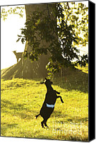 Family Farm Canvas Prints - Dancing in the Rain Canvas Print by Thomas R Fletcher