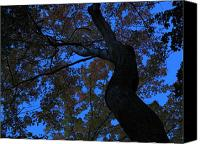 Trees Canvas Prints - Dancing Canvas Print by Juergen Roth