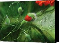 Floral Giclee Canvas Prints - Dancing Poppies Canvas Print by Carol Cavalaris