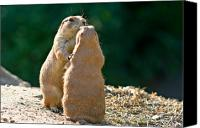 Groundhog Canvas Prints - Dancing Prairie dogs Canvas Print by Gert Lavsen