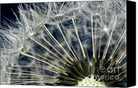 Flower Of Life Canvas Prints - Dandelion Seed Head Canvas Print by Ryan Kelly
