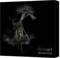 Impressionism Digital Art Canvas Prints - Dandelions Canvas Print by Heiko Koehrer-Wagner