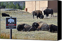 Yellowstone Park Canvas Prints - Danger Do Not Approach Wildlife Canvas Print by Bruce Gourley