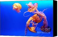 Jelly- Fish Canvas Prints - Danza peligrosa Canvas Print by Cesar Marino