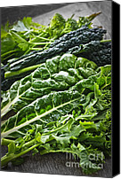 Swiss Canvas Prints - Dark green leafy vegetables Canvas Print by Elena Elisseeva