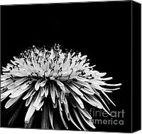 Flora Canvas Prints - Dark Canvas Print by Kristin Kreet