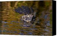 Gator Canvas Prints - Dark Water Predator Canvas Print by Mike  Dawson