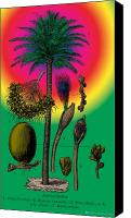Picturesque Mixed Media Canvas Prints - Date Palm Canvas Print by Eric Edelman