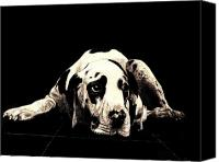 Hound Canvas Prints - Dawg Canvas Print by Andy  Mercer