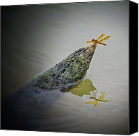 Dragonfly Canvas Prints - Day 23 Mirror...dragonfly Reflections Canvas Print by Chell Farrow