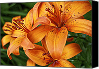 Day Lily Flowers Canvas Prints - Day Lilies 5089 Canvas Print by Michael Peychich