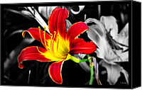 Selective Color Mixed Media Canvas Prints - Day Lily Reaching Out Canvas Print by Ms Judi