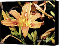 Day Lily Flowers Canvas Prints - Day Lily Canvas Print by Sarah Loft