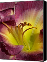 Day Lily Flowers Canvas Prints - Day Lily Canvas Print by Skip Willits