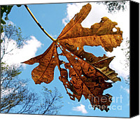 Eaten Canvas Prints - Dead Leaf Canvas Print by Kaye Menner