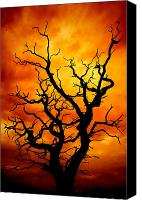 Tree Trunk Canvas Prints - Dead Tree Canvas Print by Meirion Matthias