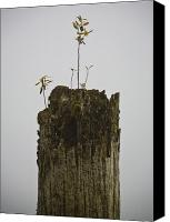 Sparse Canvas Prints - Dead Tree with Seedling Canvas Print by David Buffington