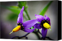 Violet Canvas Prints - Deadly Nightshade 3 Canvas Print by Scott Hovind