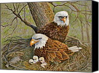 Eagle Drawings Canvas Prints - Decorah Eagle Family Canvas Print by Marilyn Smith