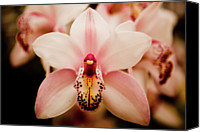 Growth Photo Canvas Prints - Deep Cut Orchid Canvas Print by Dan Pfeffer