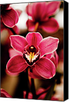 Market Canvas Prints - Deep Cut Orchid Society 15th Annual Orchid Show Canvas Print by Dan Pfeffer