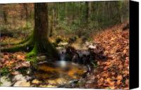 Lanscape Canvas Prints - Deep Forest Creek Canvas Print by Rich Leighton